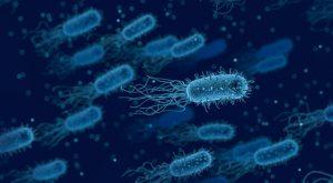 Duże zbiorowiska bakterii